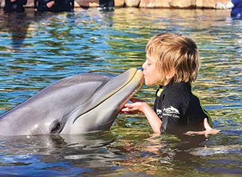 Kinzie with dolphin - Make-A-Wish Story Image